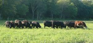Picture by Aquidneck Farms.